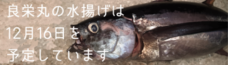 水揚げ12月16日.png